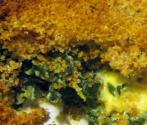 Breakfast Spinach Casserole Ideas